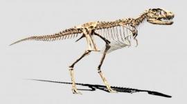 デジタル復元した幼体のティラノサウルスの全身骨格©Toppan Printing Co., Ltd.(凸版印刷の発表資料より)